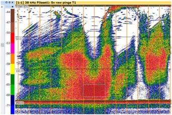 魚群探知機で見た海面まで届くガスプルーム(佐渡北東沖)