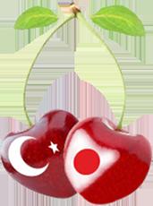 トルコロゴ