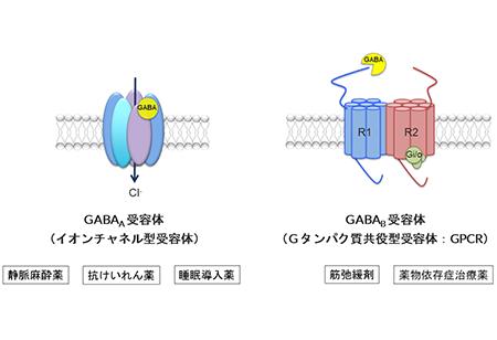 GABA受容体の種類と構造