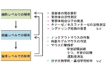 照沼教授の研究アプローチと手法